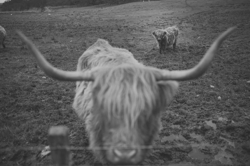 Preboda en Escocia38