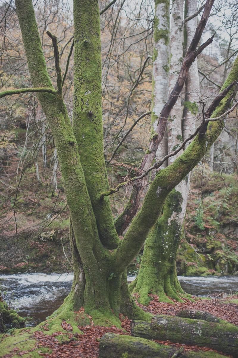 Preboda en Escocia51